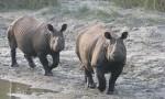 Słonie, nosorożce i tygrysy