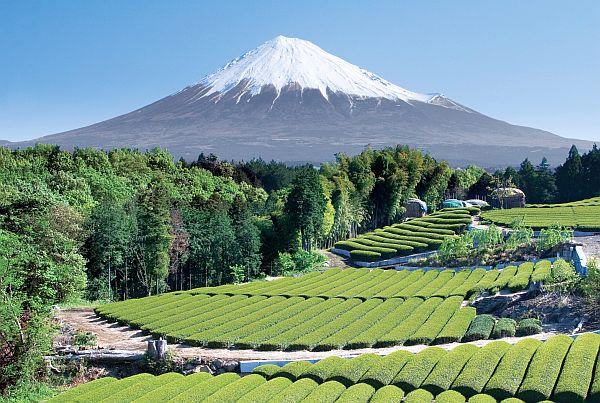 Japonia 15 dni