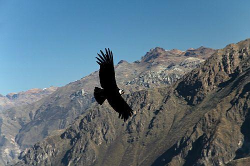 Peru2_Mariusz_Lewicki