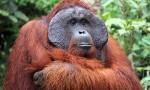 Indonezja: Borneo – Jawa – Bali