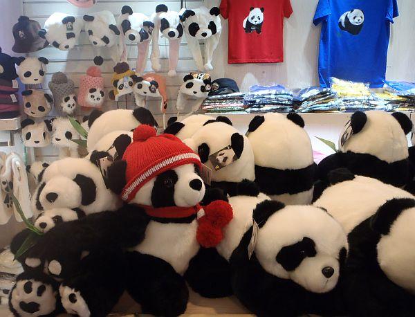 chiny panda